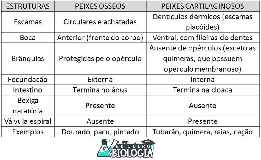 diferencas entre peixes cartilaginosos e osseos