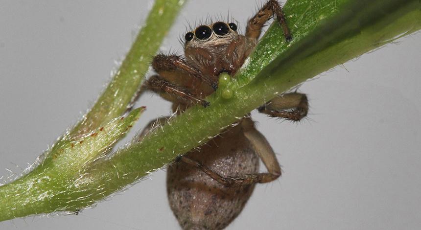 A dieta das aranhas pode ser muito mais complexa do que você imagina