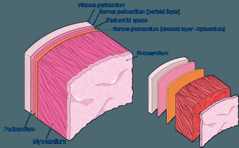 Banco de imagens e ilustrações científicas para apresentações3