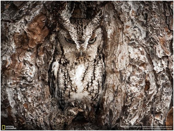 camuflagem-exemplos-e-curiosidades