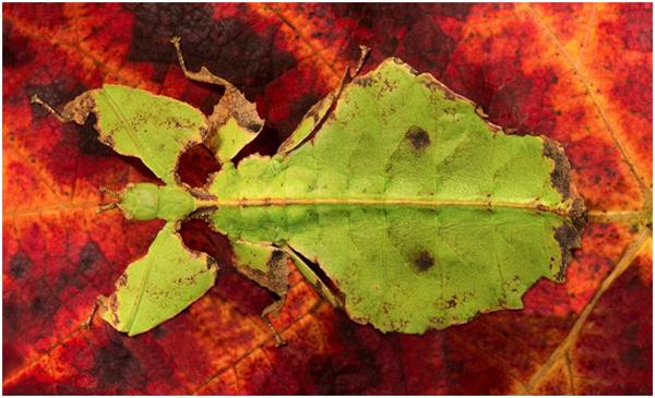camuflagem-exemplos-e-curiosidades1